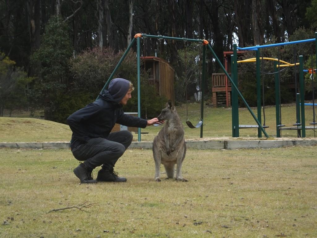 Sehr viel Zeit haben wir auch mit einer zahmen Horde Kängurus verbracht :D