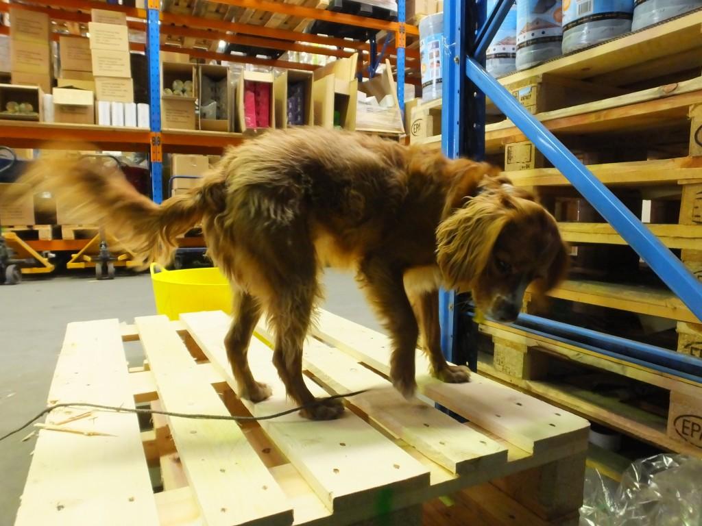 """""""Birdgess"""" unser Fabrikhund"""